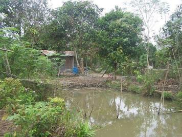 Ao cá và cái nhà chòi giữ vườn của nhạc sĩ Phạm Minh Cảnh
