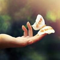 Hồn bướm mơ tiên (Mai Trường & Tô Vân), qua tiếng hát Tuyết Mai